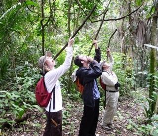 Belize Water Tree
